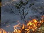 Артобстрелы Луганщины привели к лесному пожару